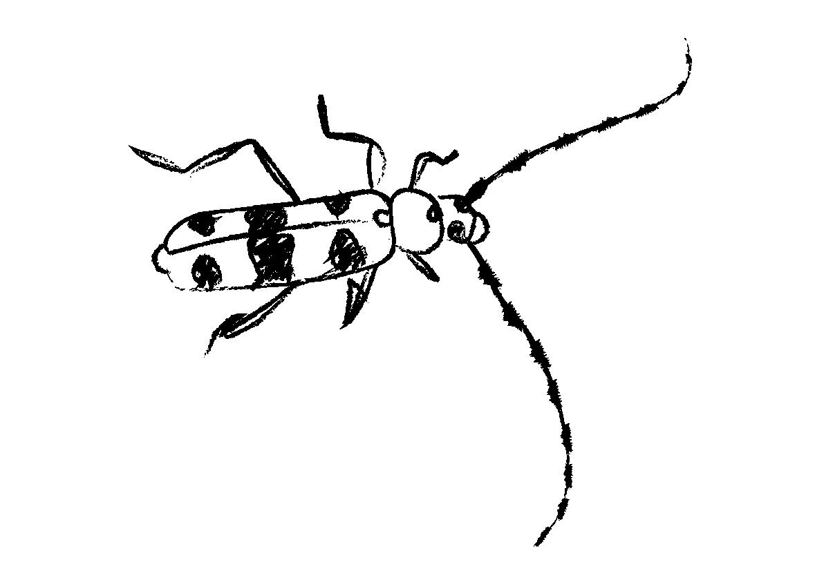 Xilofagoaren ilustrazioa